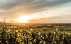 Techniciens viticoles (H/F) Occitanie